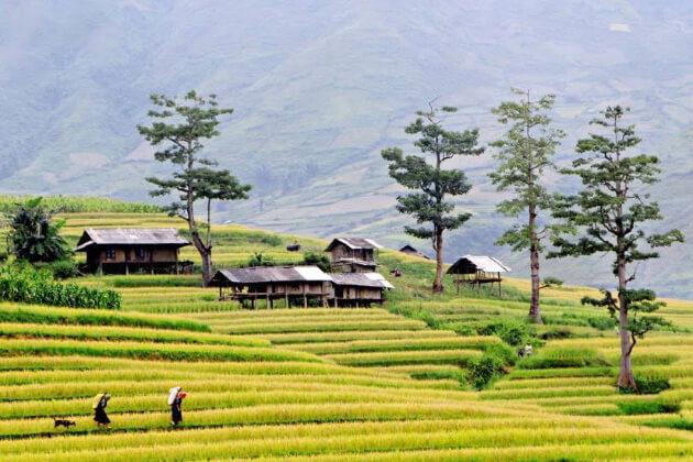 Mu Cang Chai best spot to visit in Vietnam