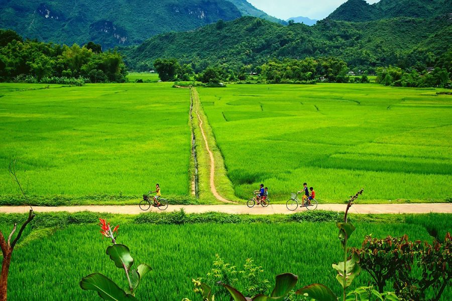 Vietnam Could Welcome Vaccinated Foreign Tourists in 2021
