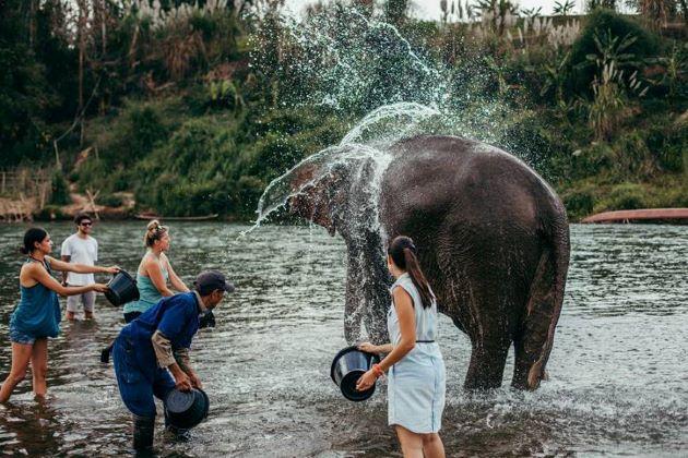 elephant camp in laos