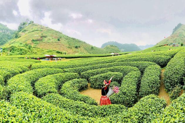 explore Moc Chau best things to do in Vietnam trip