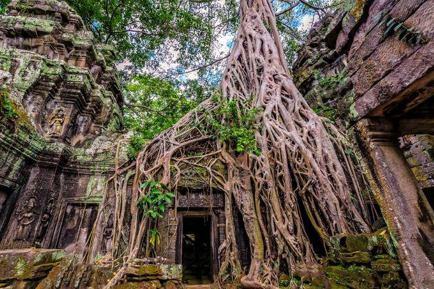 visit ta prohm temple in siem reap